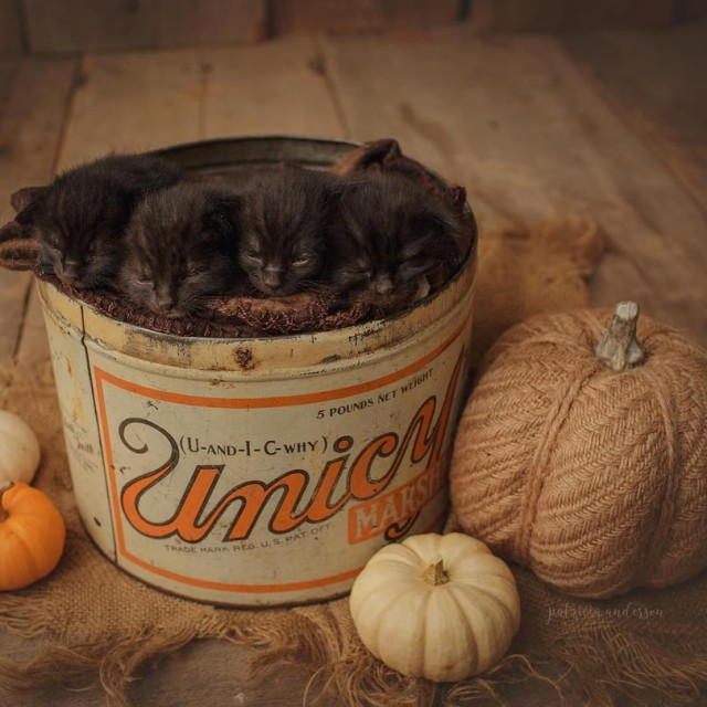 Because black kittens and fall go hand in hand kittenshellip